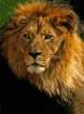 King of the Jungl...