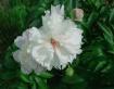 Blooming Buddies