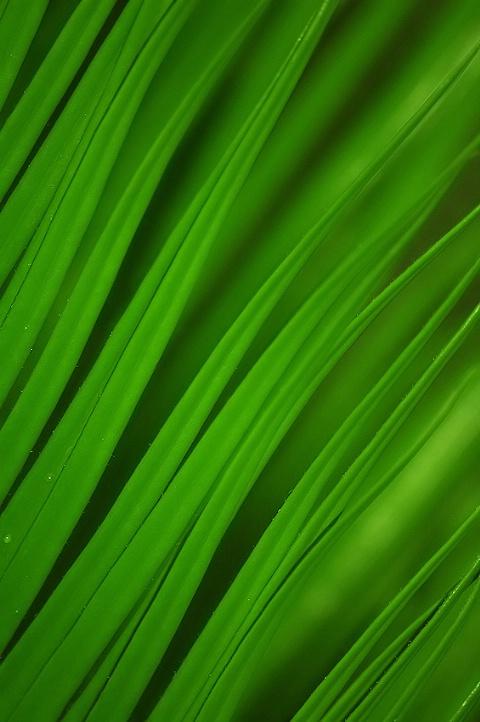 Green on Green