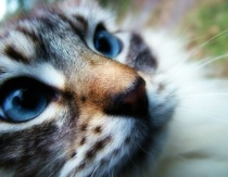 Just look at those eyes…
