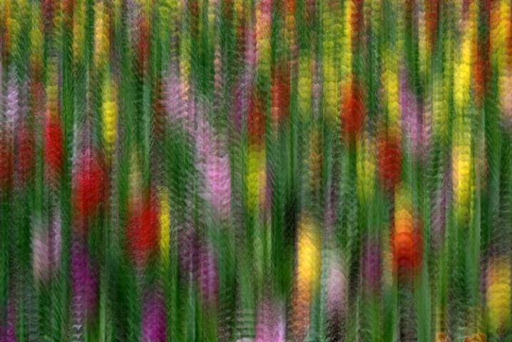 Tu Tu Tulips