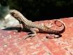 Florida Reptiles