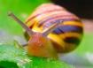 popeye the snail