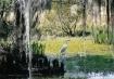 Louisiana Swamp B...
