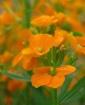 Orange You Glad I...