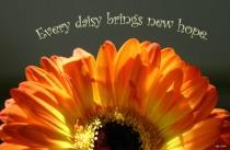 Every Daisy