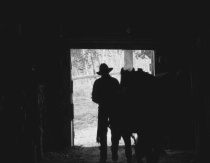 Cowboy Heading Out