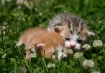 cuddly soft