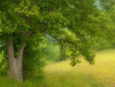 The Fairytale Tree