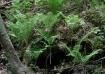 Fern Hollow