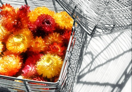 A Basket of Colors