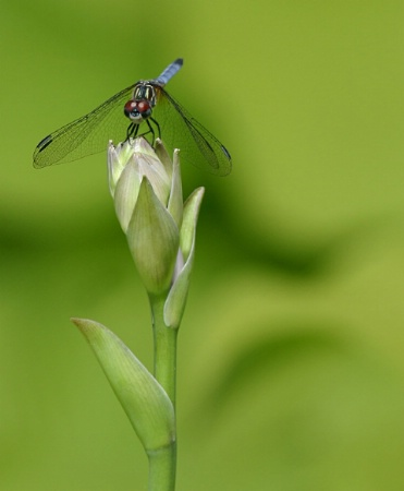Bokeh-Fly