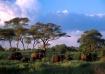 Elephants-Tanzani...