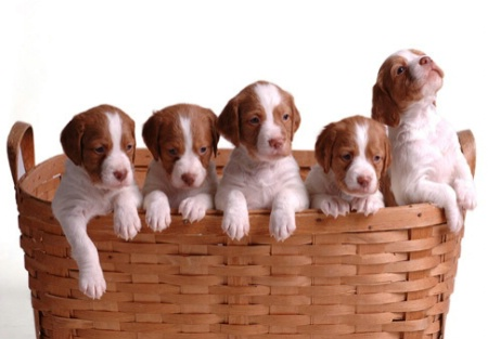 Nothing cuter than puppies