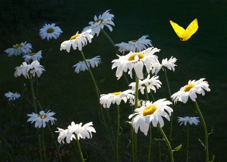 Flowe and Butterfly