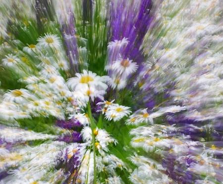 ...crazy daisies....