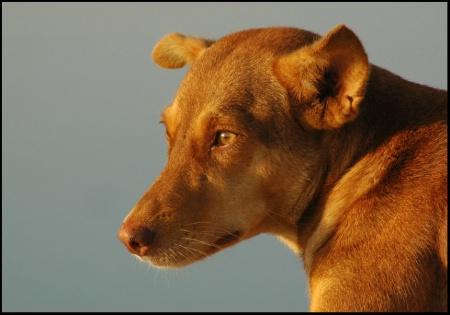 portrait of mumbai street dog