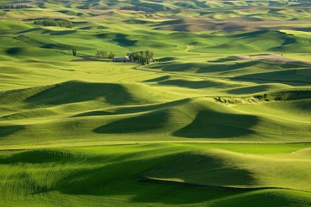 Palouse Patterns - Evening