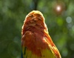 Parrot Flare