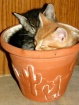 Two peas in a Pot