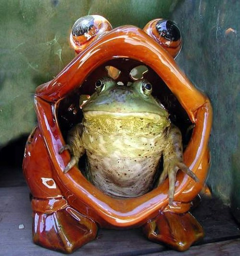 Frog-n-a-Frog