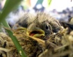 Baby Bird Or Old ...