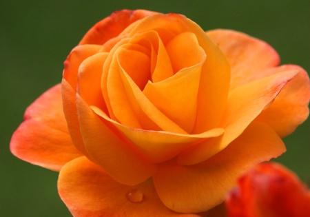 Orange you glad . . . .