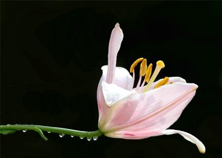 Transparent Petals