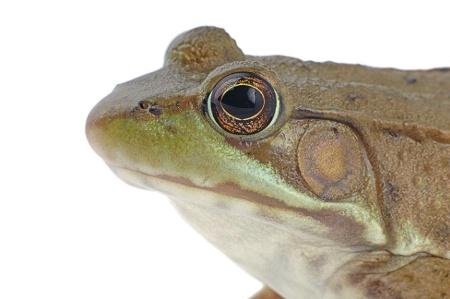 Studio Froggie
