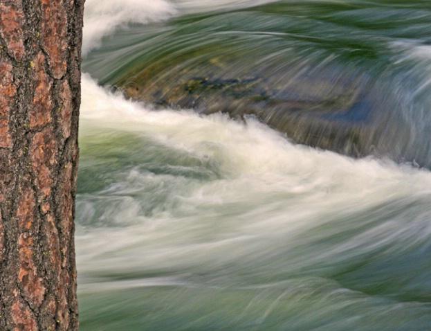Tree with Merced Behind - ID: 995780 © Sharon C. Nickodem