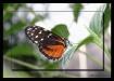 Silent Flutter