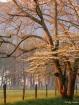 Sparks Lane Tree