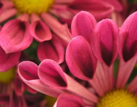 Flower Finger Tips