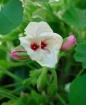 Eyes Of A Flower