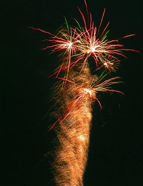 Fireworks Palm