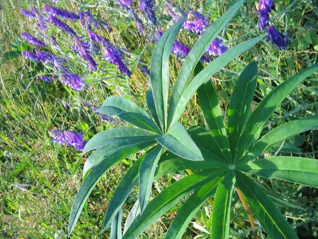 Interesting Weeds