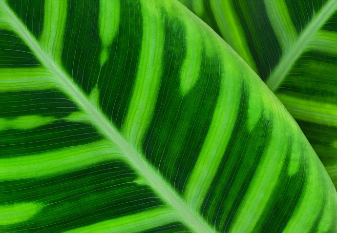 Leaf Lines - ID: 1034984 © Jim Kinnunen