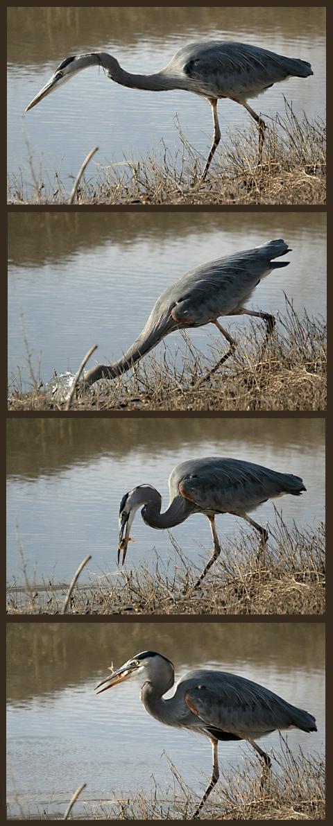 Heron Strike