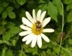 buzzing bloom