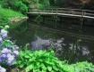 Woods Hole Pond