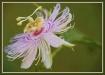 Flower on the vin...