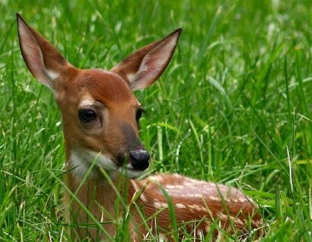 Bambi I Presume