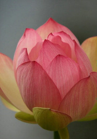 water flower 1