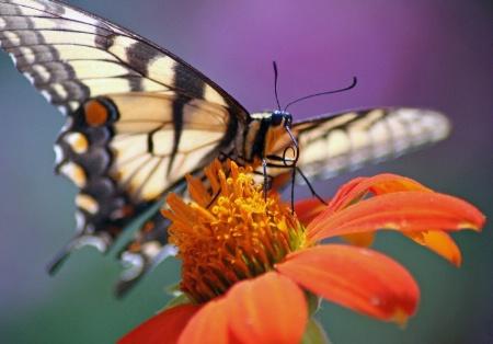 Butterfly treat