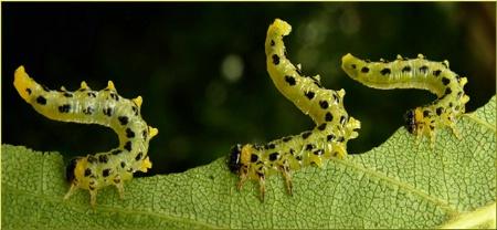 Caterpillar Circus
