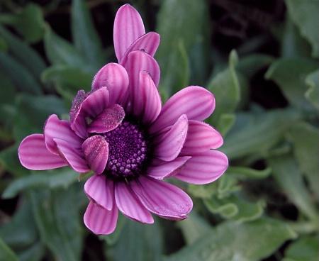 Purple Simplicity