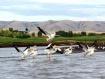 Pelicans Taking F...