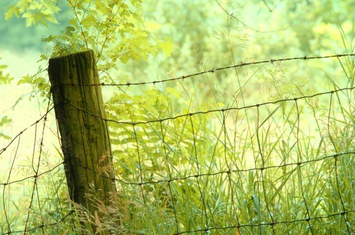 Summer - Along the Fenceline
