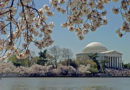 One Nation Under The Cherry Blossoms