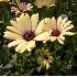 © Heather Robertson PhotoID# 1096600: Yellow flowers